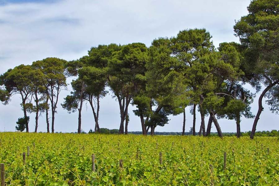 castello-monaci-wine-experience_011-900x600.jpg