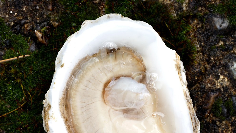oysterland: a journey to the heart of bivalve country - Bon Appetit