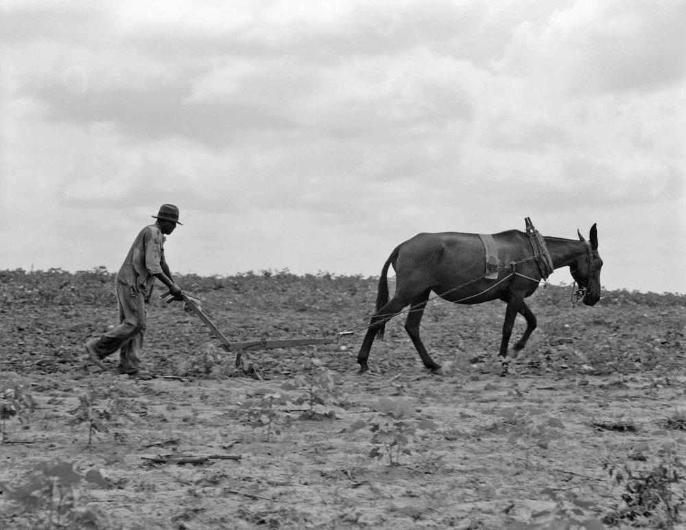 Son of sharecropper family near Chesnee, South Carolina, 1937. Dorothea Lange photograph.