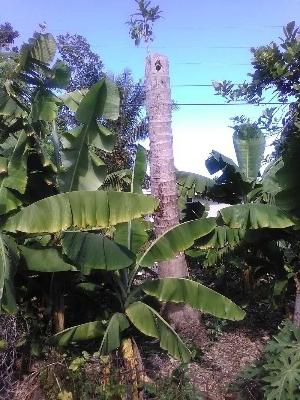 Tree at Mom's.jpg