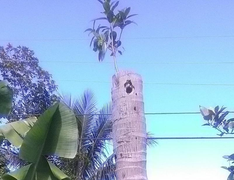 Tree at Mom's Closer 2.jpg