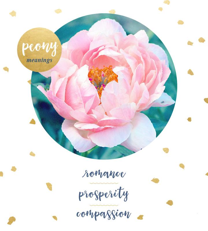 flower-meanings-peony2.jpg