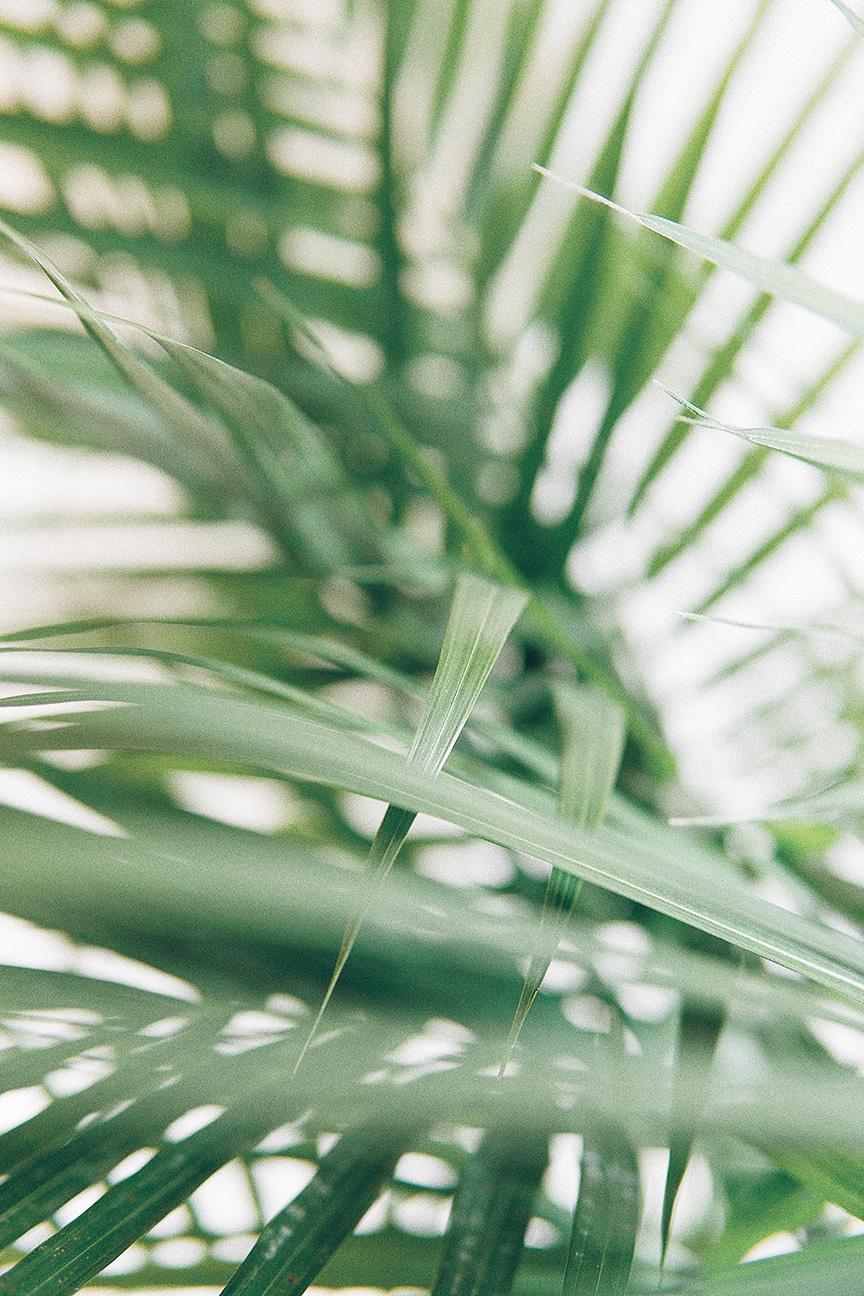 greenery.jpg