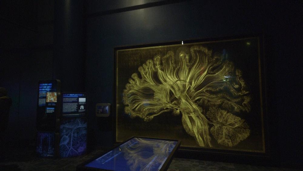 Greg Dunn brain imagery.jpg