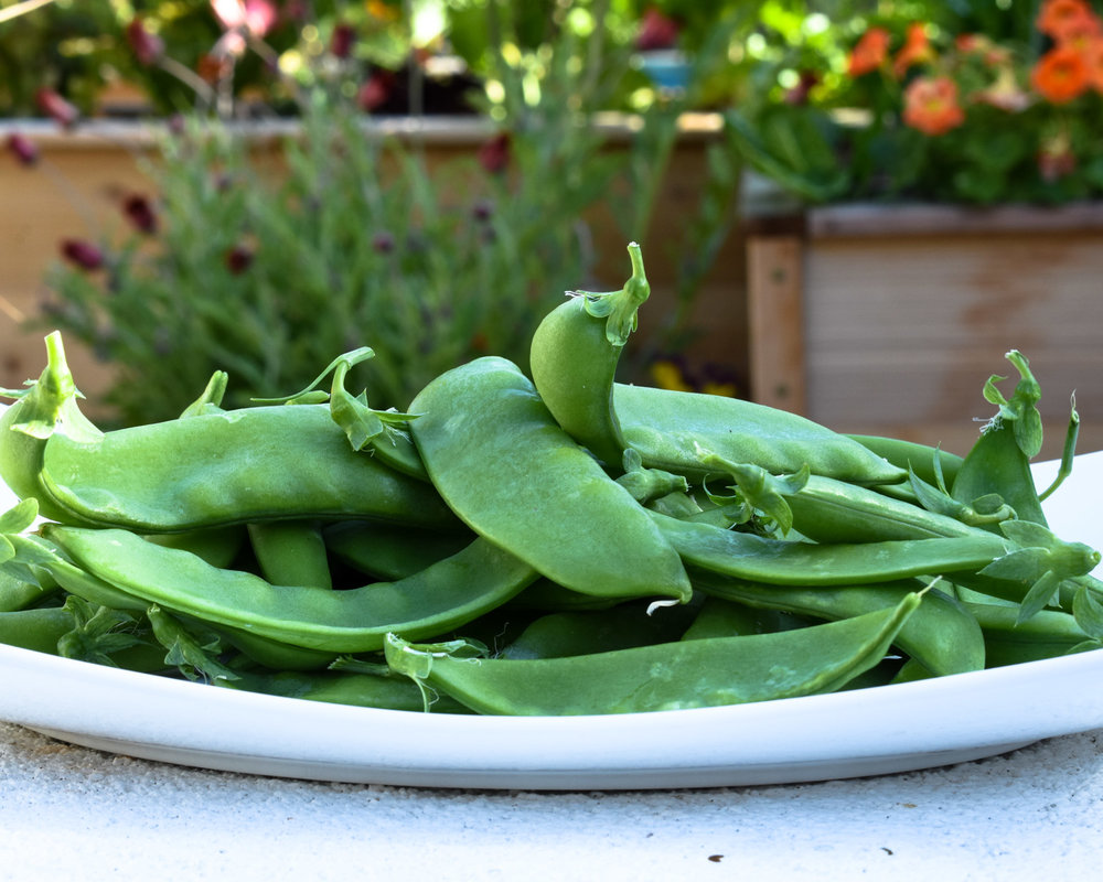 Giant Snow Peas
