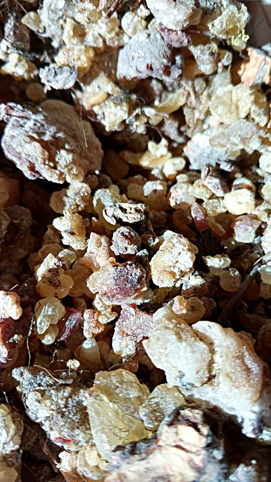 Pine Resin Hand Gathered from The Bitterroot Pine Trees.