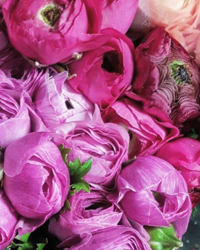 Happy Valentine's Day from Monterosso Imports 💕 🌺  #younglove #lovers #newlyengaged #weddings #destinationweddings #familylove #friendlove #loveoftheearth #lovefortheearth #loveoflife #lovelife #lovehealth #lovehealthylife