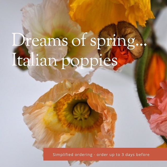 The first day of spring is only weeks away. For to-your-door delivery, a concierge service, and exquisitely beautiful sustainable product, follow the link in our bio to shop or to set up an account with us 🧡💛🧡 #flowers #sustainableflowers #springflowers #vancouverflorist #floraldesign #sustainablefarming #weddingflowers #homedecor #engagement #poppies #springflowers #floralartistry #destinationwedding #weddinginspiration #boulevardvancouver #victoriaflorist