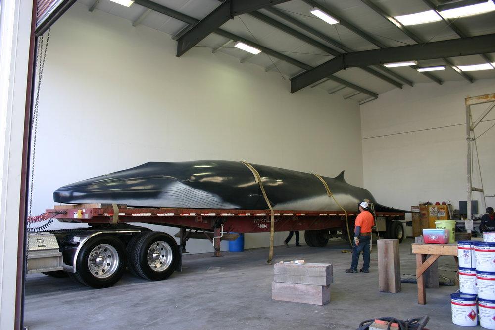 Whale.2.jpg