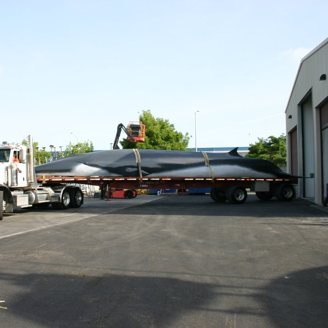 Fiberglass & Gel Coat Refinishing - Our fiberglass and gel coat specialists give a new look to The Lawrence Hall of Science's beloved Fin whale replica.