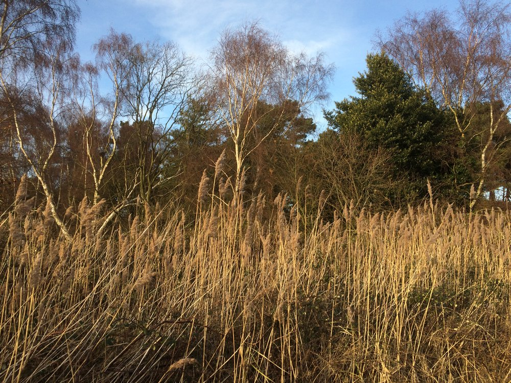 Wind through the reeds; mindfulness to the present moment in nature