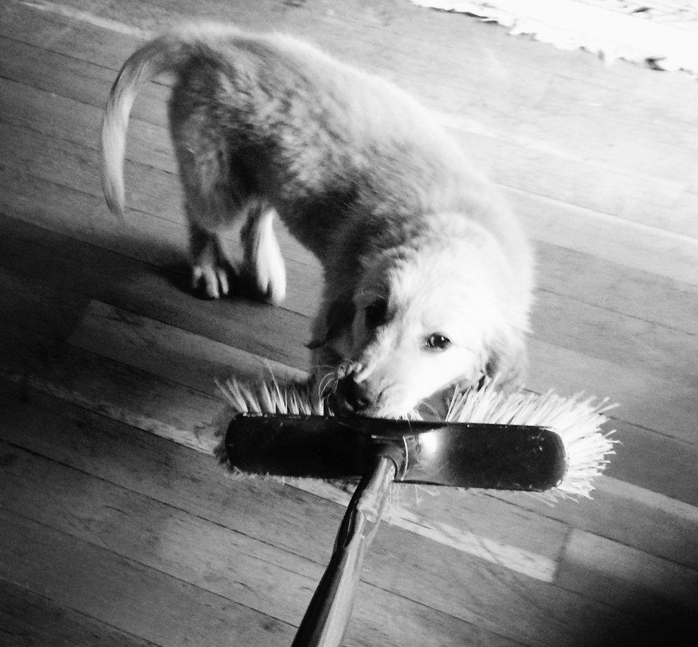 puppy,broom, play