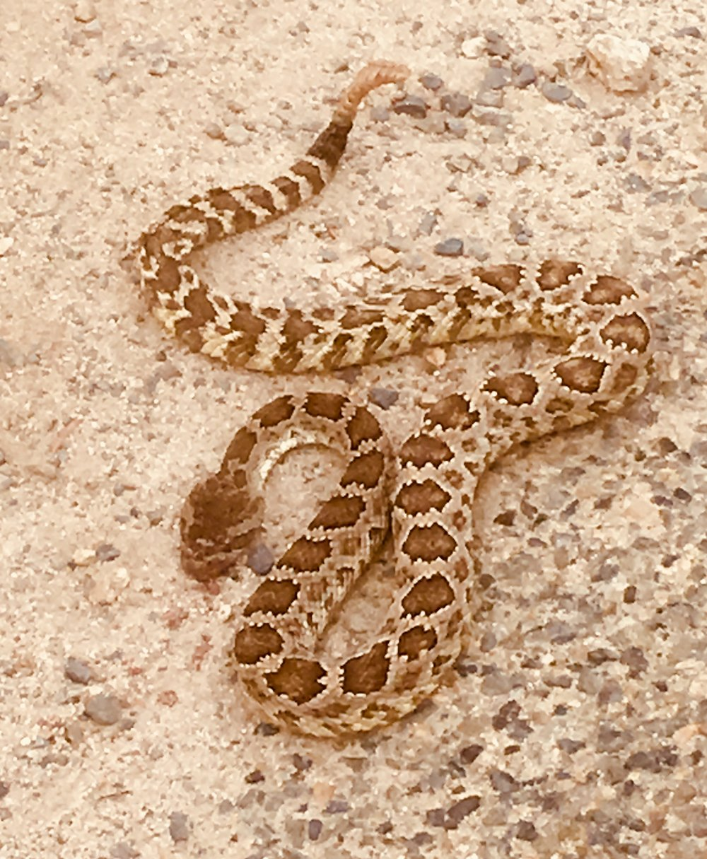 Just one of many rattle snakes along the way