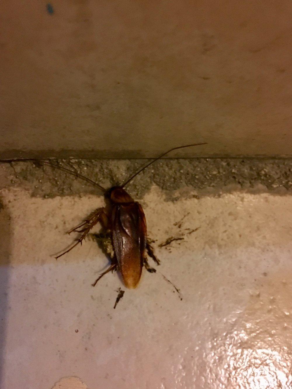 Cockroach motel