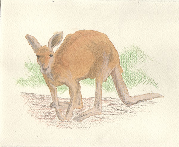 Cangaroo, 2014. Watercolor and Colored Pencil.