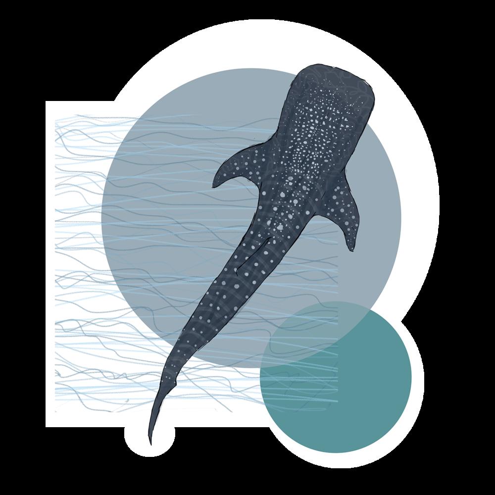 Whale Shark, 2015. Digital Painting.