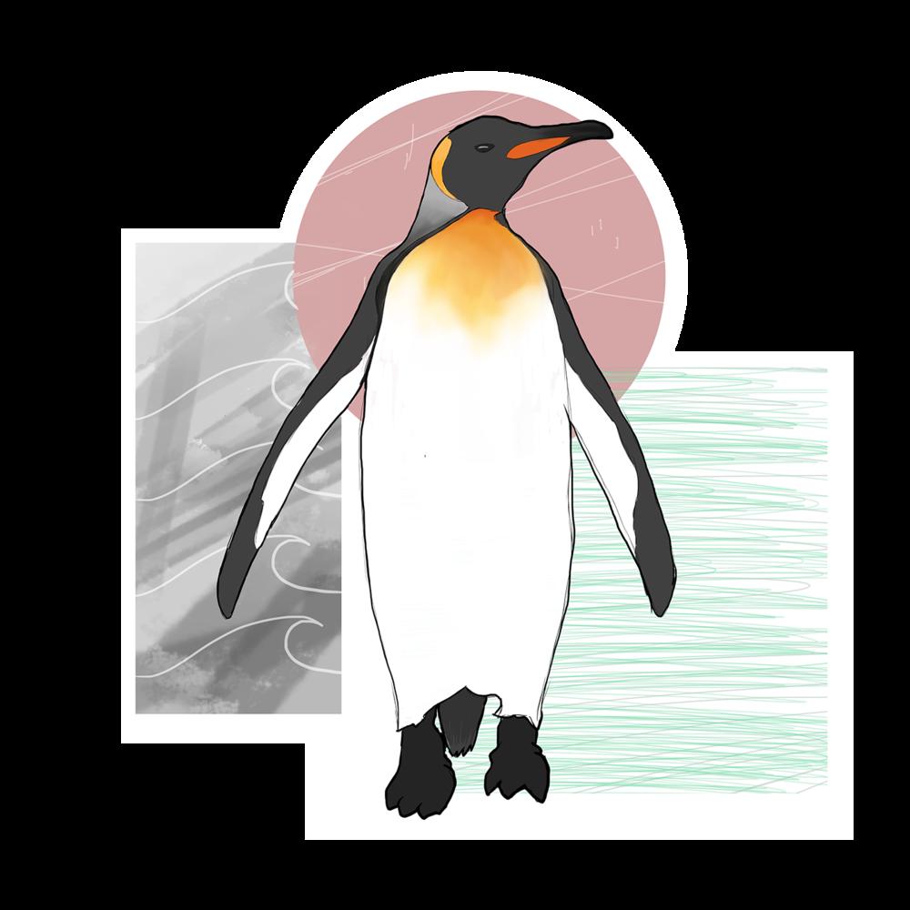 Emperor Penguin, 2015. Digital Painting.