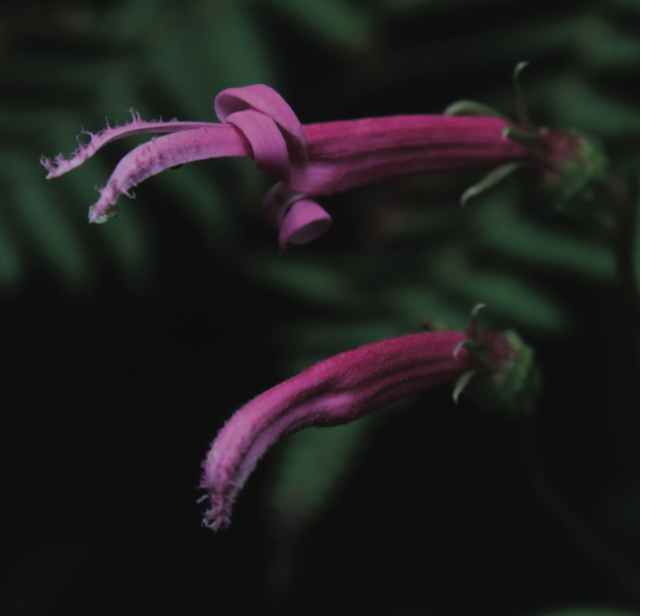 Example of Photos Collected - Plants