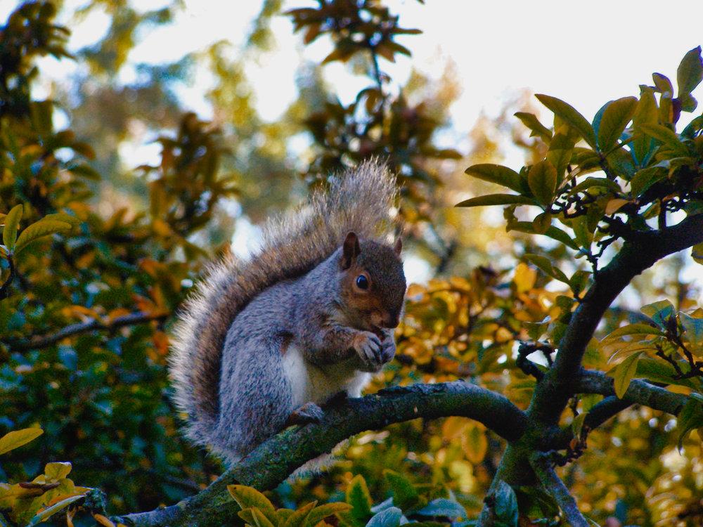 Tree Rat-Kensington Gardens-London-England-wmlamont_1aPB040175.jpg