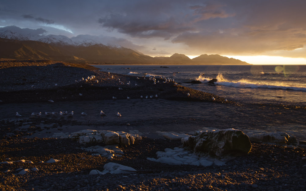 Kaikoura, New Zealand. Known for its proximity to dolphin, humpback, and sperm whale feeding grounds, I personally love it for the vast wealth of fauna found anywhere you care to look. It's nearly impossible to take a bad photograph in Kaikoura!
