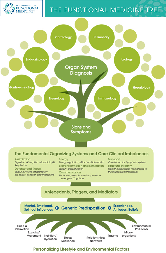 IFM-Tree-Graphic.jpg