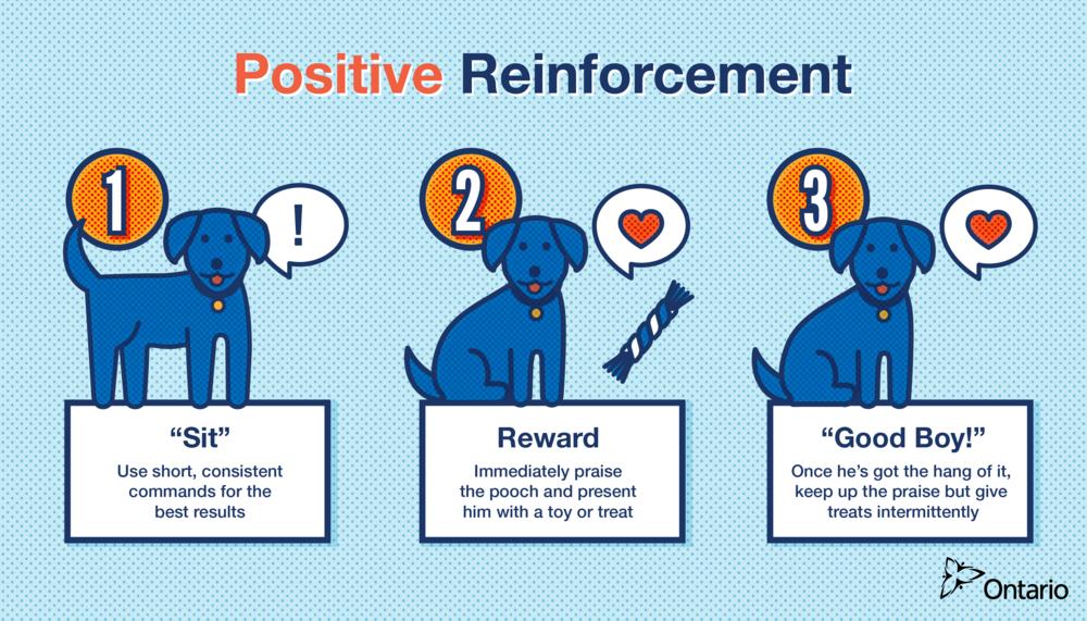 K9_positiverenforcement-01.png