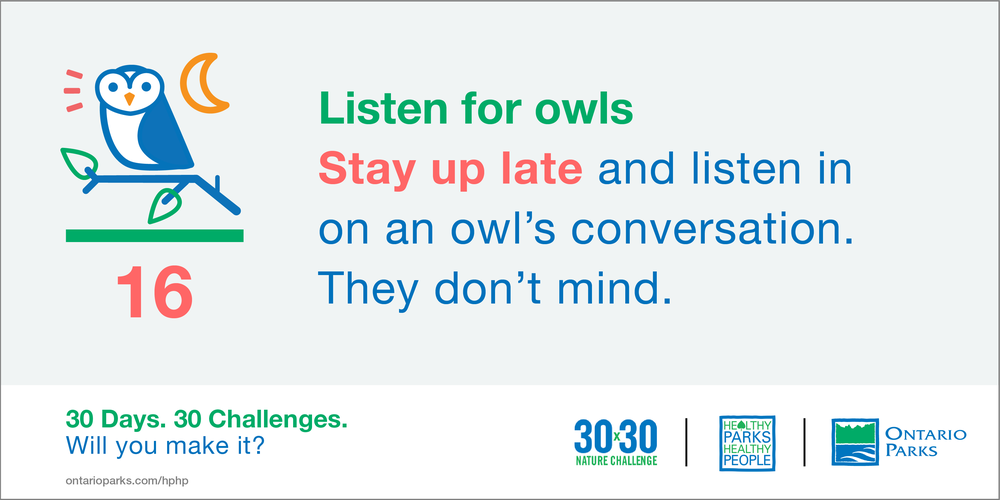 HPHP3030_shareables_parks_Owl hoots.png