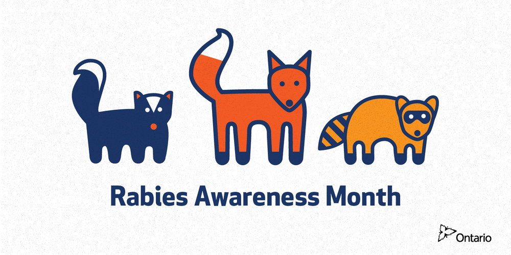 A series of shareables for Rabies Awareness Month