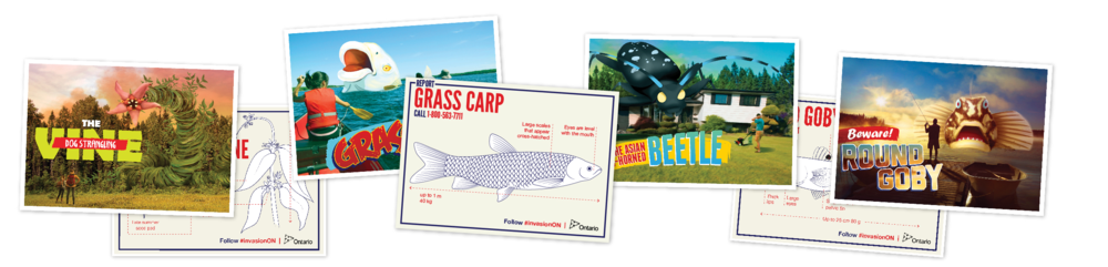 Full series of postcards for Ontario Parks and stakeholder educational programs