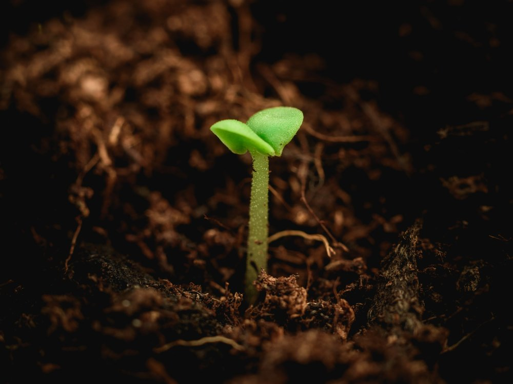 Agronomy Consultant - Helping farmers and gardeners build healthy soil and grow better crops.Check [About] for more info.