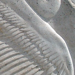 Pelican Wing Detail