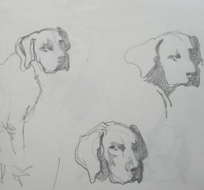honden kl.JPG