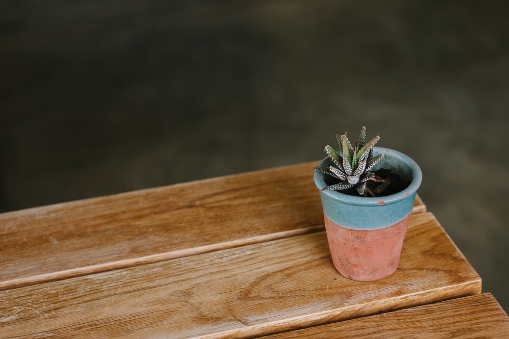 Potted Plant.jpg