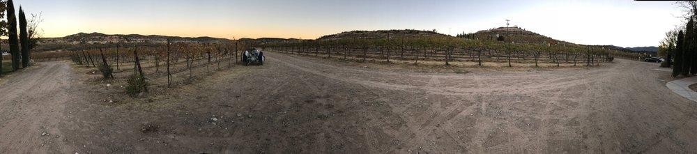 Alcantara Vineyard