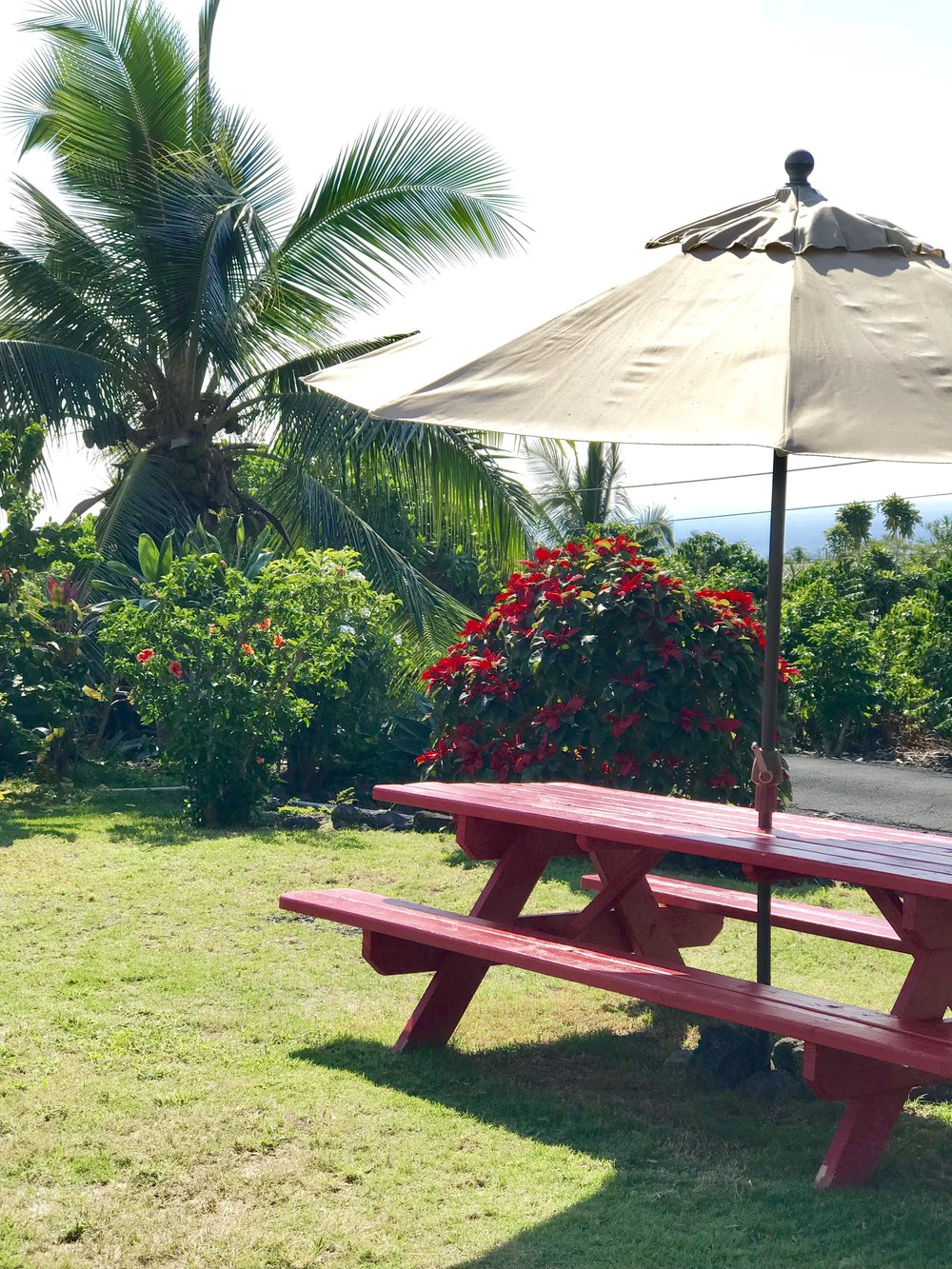 Relaxing at Big Island Bees.jpg