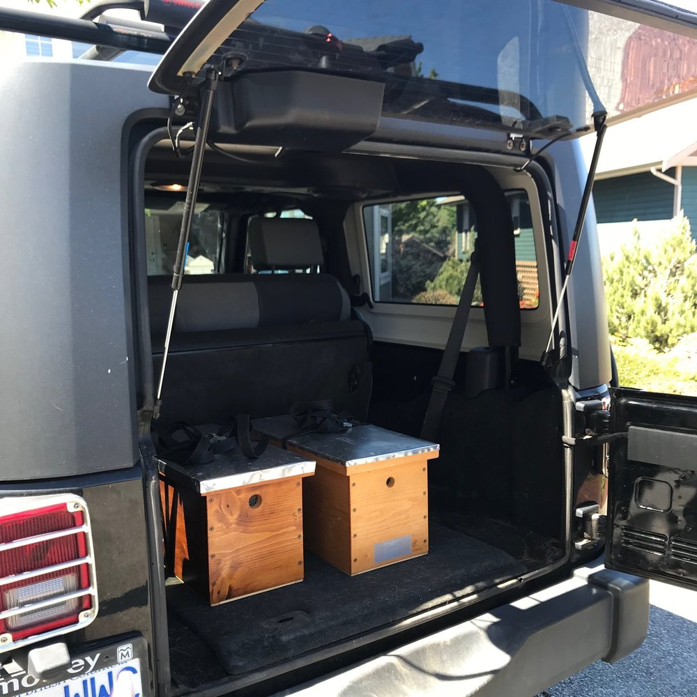 Getting ready for the transport! I did not think I'd be able to drive with thousands of bees in the back seat!