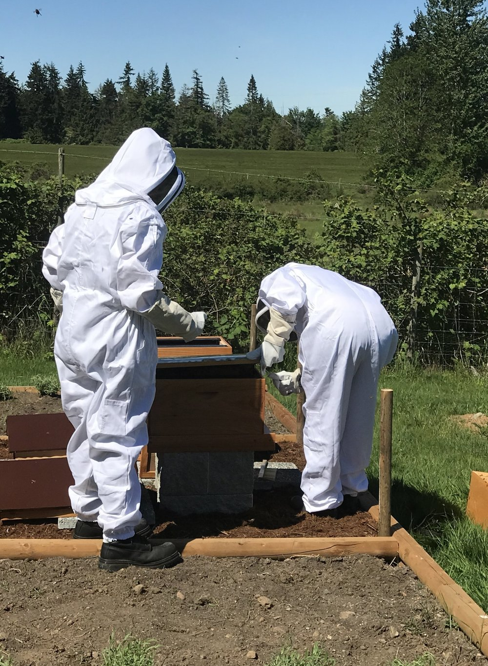 After we placed the lid with the three frames attached over the hive, it was much easier to detach them.