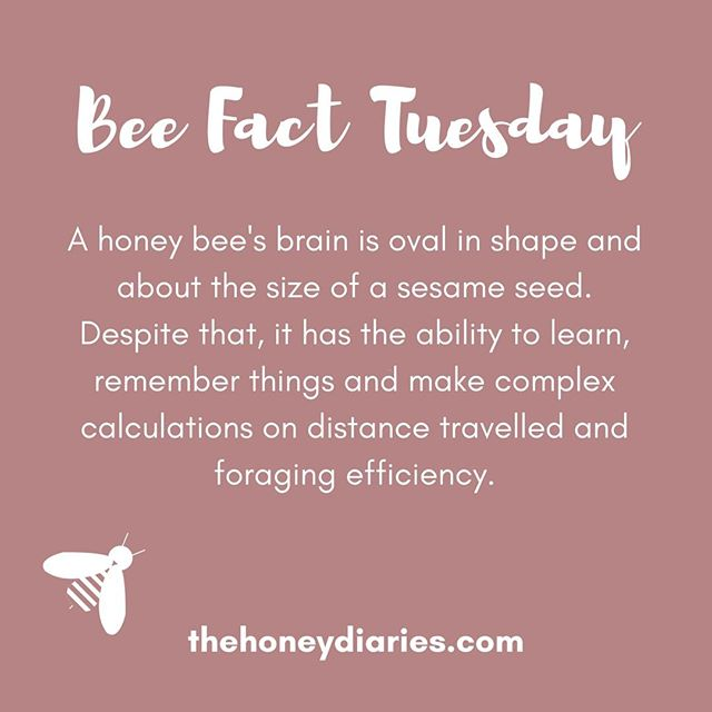 Those little genius bees! 🐝💡#beefacttuesday