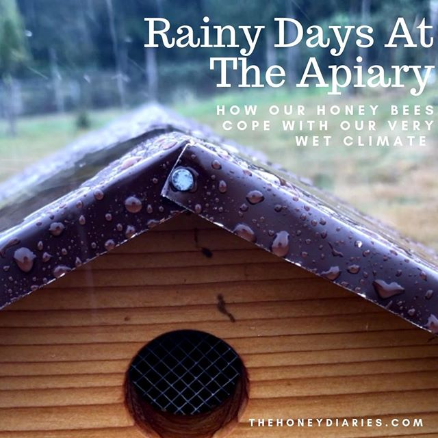 Anyone else worried about our little honey bees when the rain starts to downpour? My research on bees in the rain helped ease my mind. Check out our blog post all about it! 🐝⛈☂️