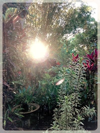 morningsun bamboo.jpg