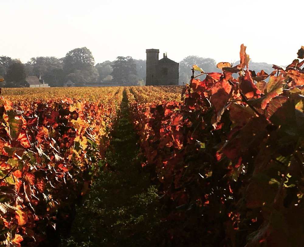 Burgundy2.JPG