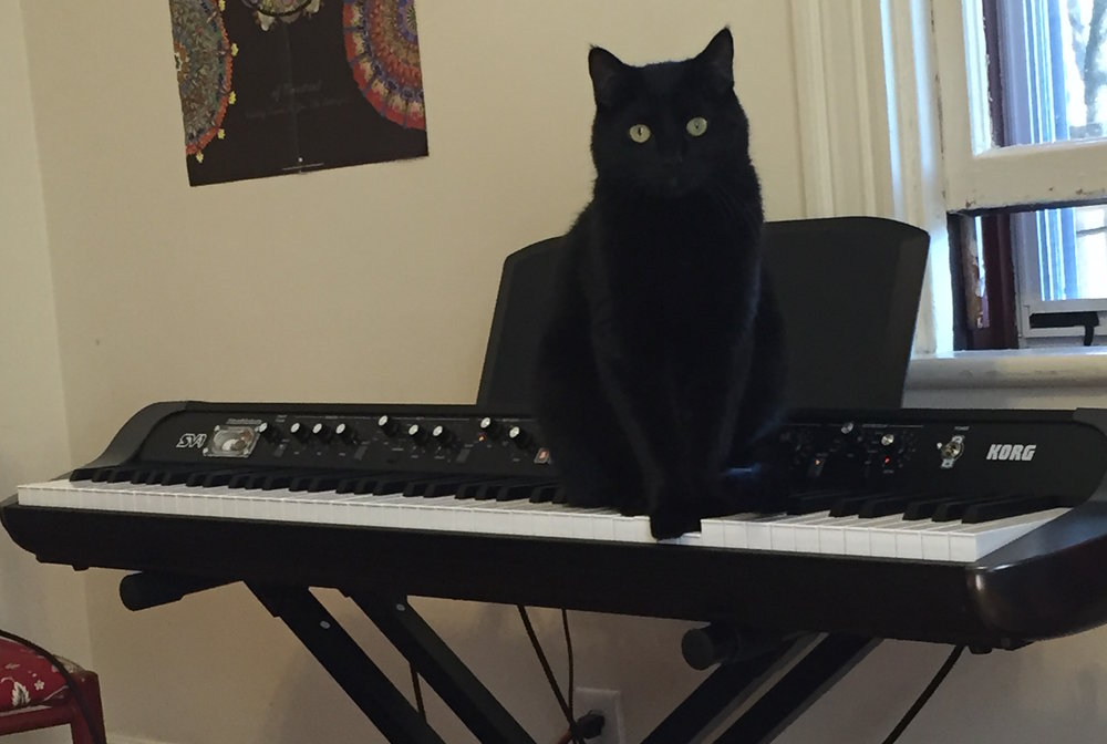keyboard cat.JPG