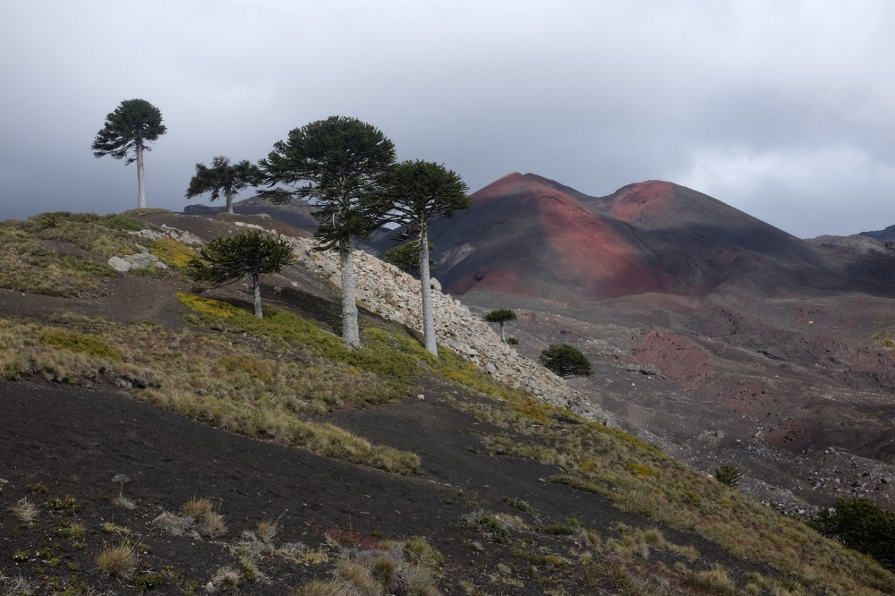 Adventure Travel Nevados de Sollipulli with Samadhi Eco Resort Chile