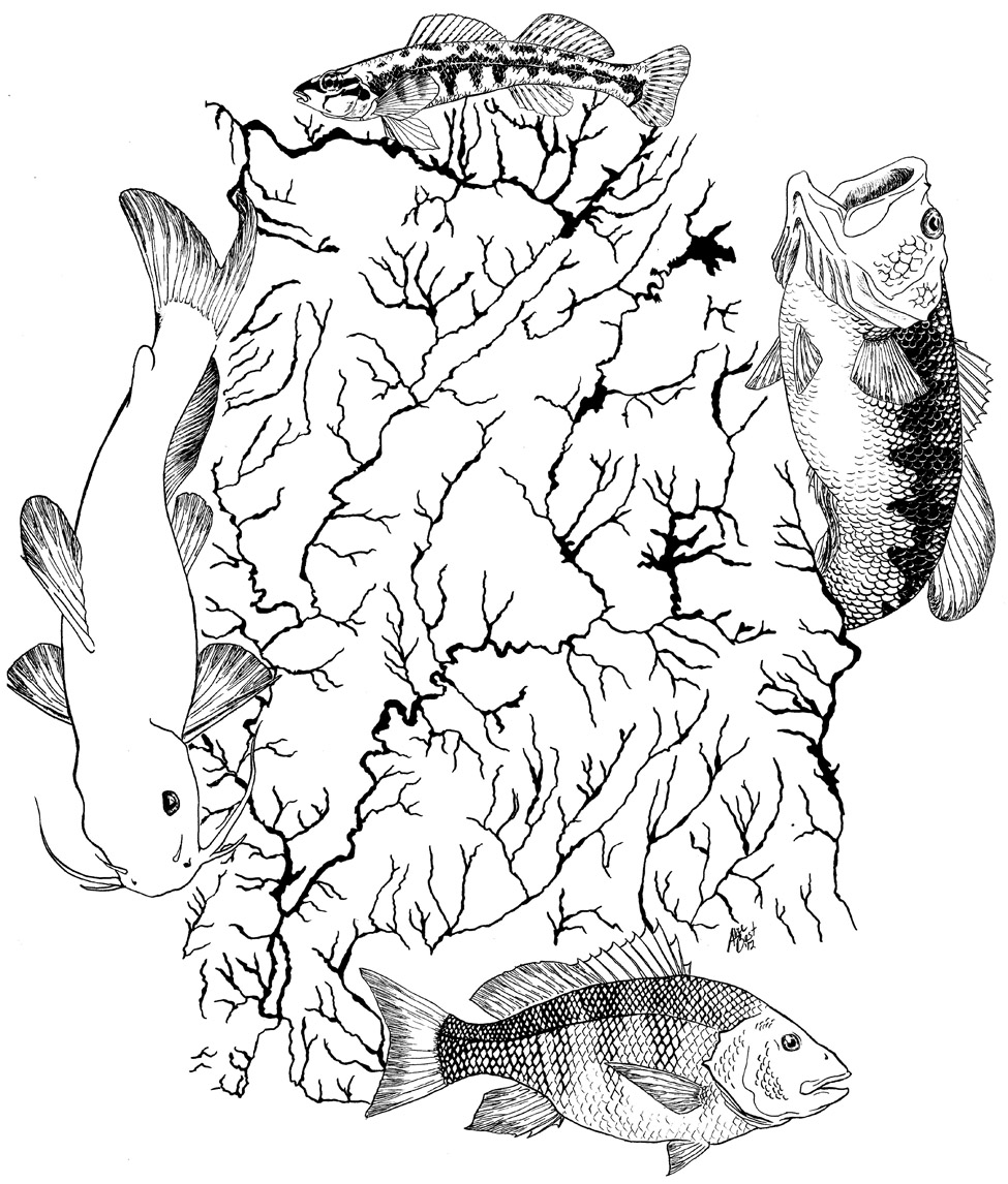 Fishes of Importance
