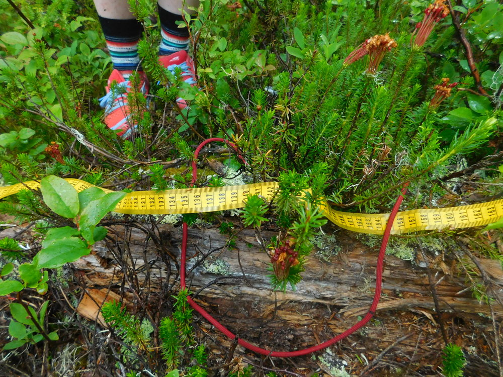students study the forest ecosystem by counting different types of plants in the rope study area as they move along the meter tape.