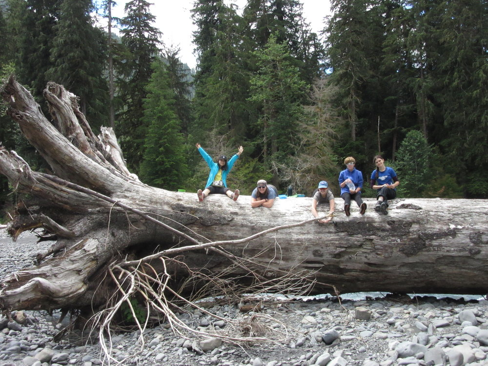 students sprawl out on an enormous fallen tree for a well-deserved break by the river in olympic national park.