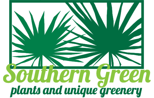 window for southern green green lobster CROPPED.png