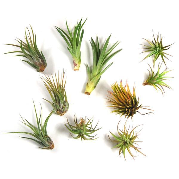 grabbag_tinyplants_1_2000x.jpg