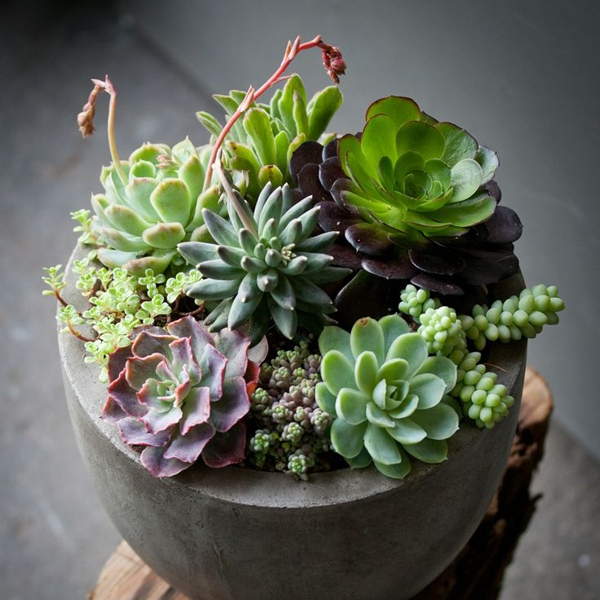 indoor-succulents-garden.jpg