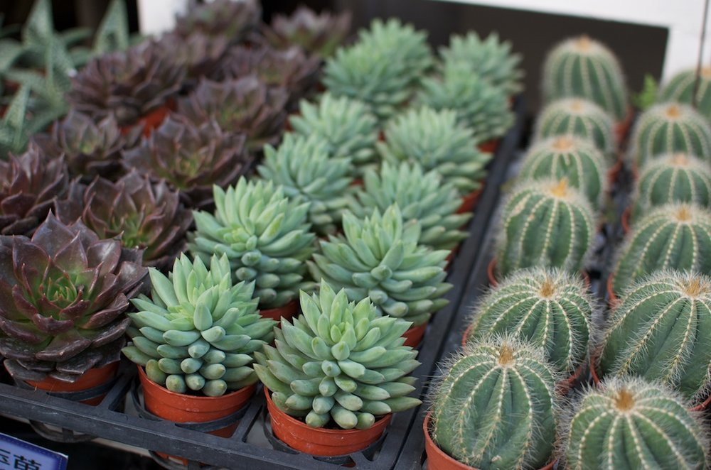 how-to-care-for-succulents-030.jpg